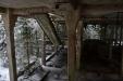 Schody na střechu porostlou lesem